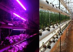 Lamparas LED Especiales Para Cultivar Plantas